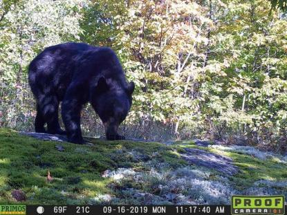 Trail Cam of a bear
